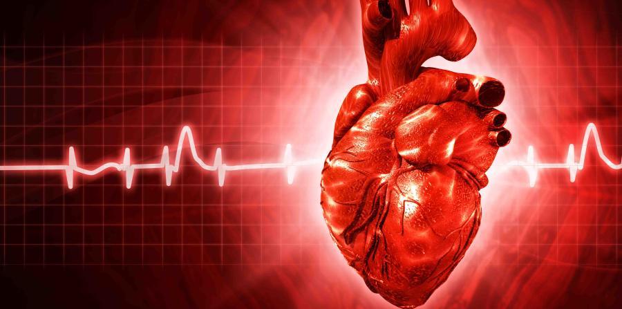Disfunción Ventricular post ejercicios extenuantes:  ¿Qué sabemos hoy de la Fatiga Cardiaca?