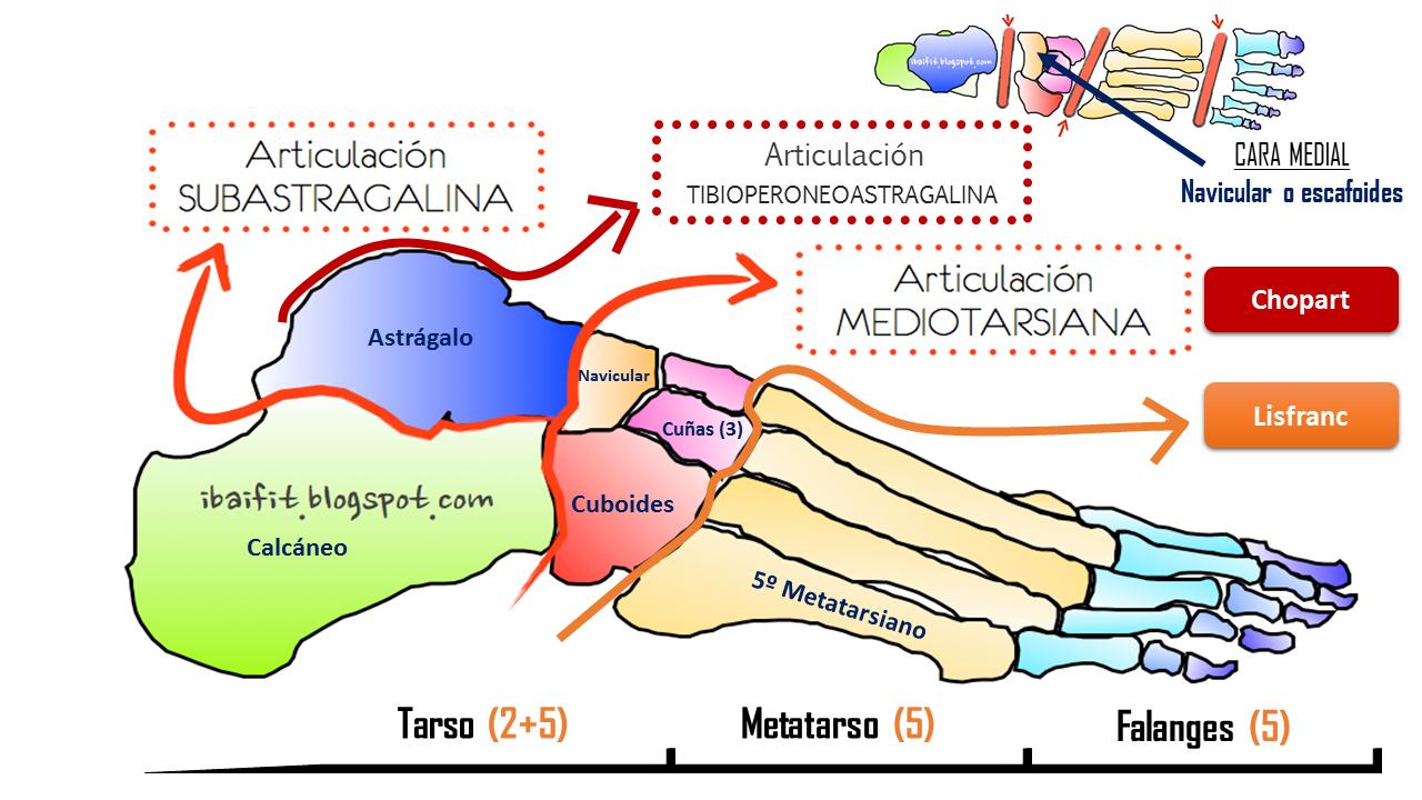 Huella plantar, biomecánica del pie y del tobillo: propuesta de valoración