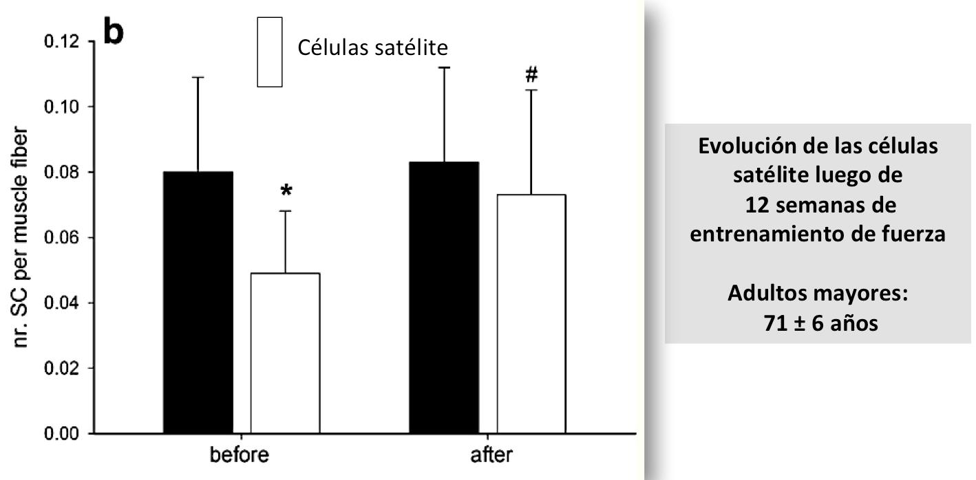 Respuestas de la células satélites a los estímulos de entrenamiento (Oct 2018)