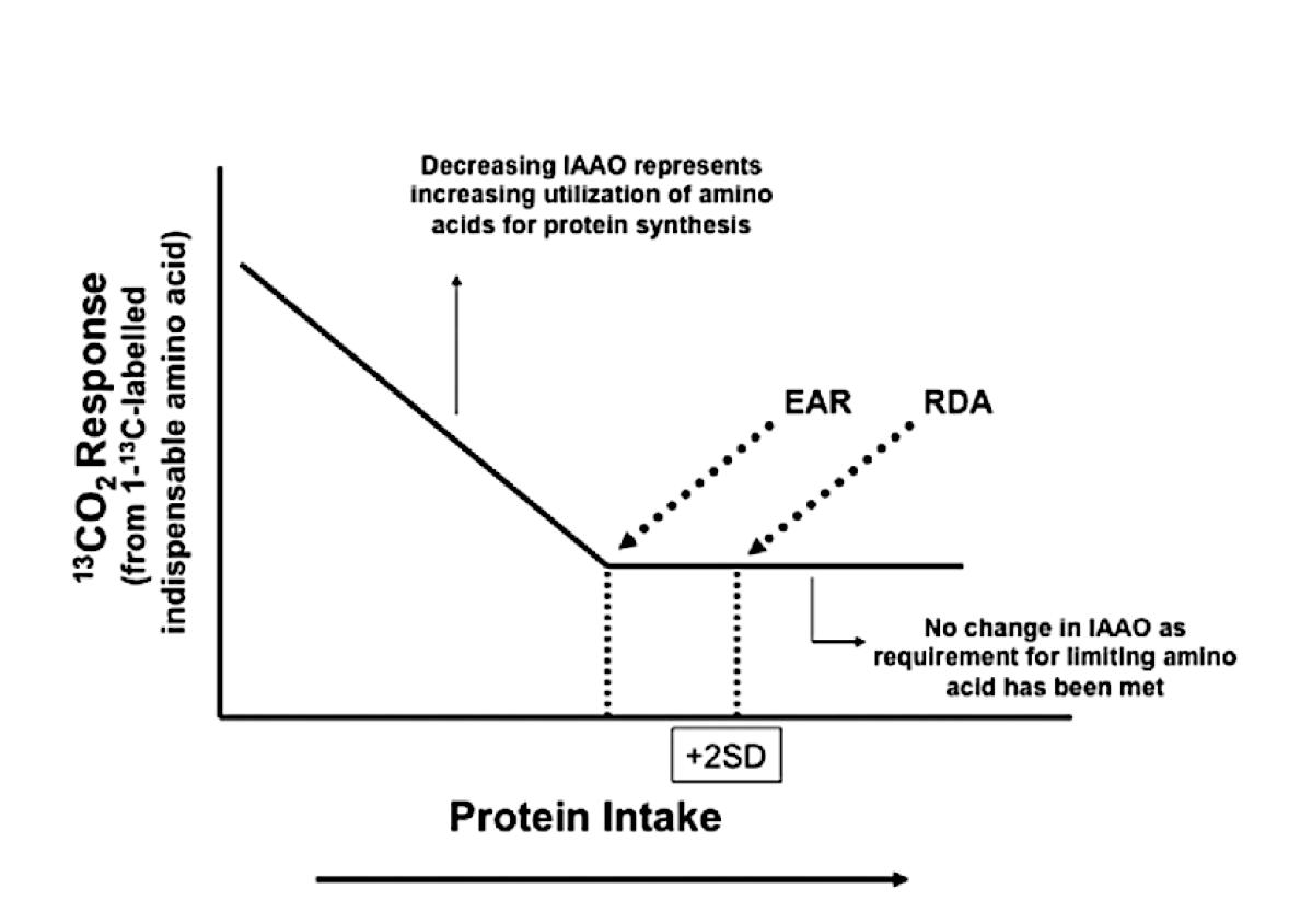 Recambio proteico y necesidades en poblaciones de edades avanzadas