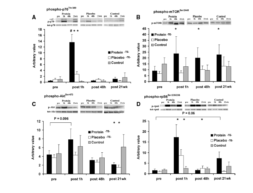 mTOR y síntesis proteica asociada al ejercicio y a la ingestión de proteínas. La hermosa biología que se pierden algunos por no mirar por la ventana anabólica.