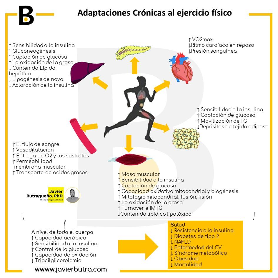 Ejercicio y salud metabólica: más allá del músculo esquelético