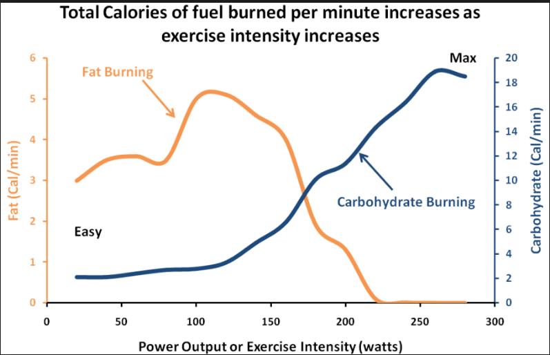 Dieta baja en carbohidratos en el ejercicio