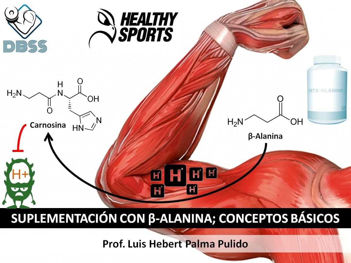 Suplementación con β-Alanina; Conceptos básicos