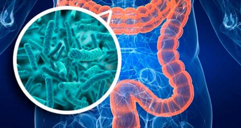Resumen de Ejercicio de Resistencia y Microbiota