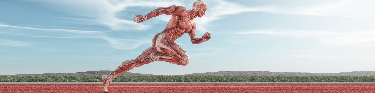 Fundamentos de la Anatomia Funcional y Patrones de Movimiento