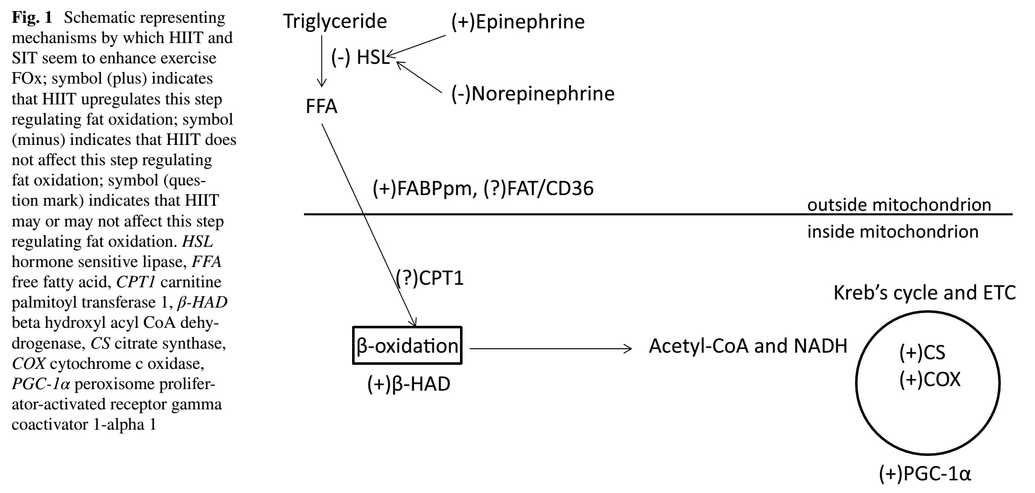 Qué tan difícil resulta examinar cambios en la oxidación de grasas en respuesta a distintos regímenes de entrenamiento por intervalos de alta intensidad (HIIT).